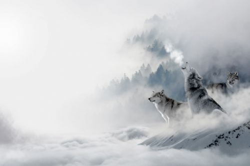 Wolf Canvas Wall Art -  Howling Pack